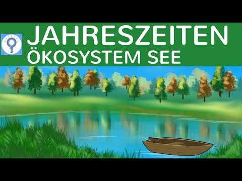 Jahreszeitenverlauf im Ökosystem See - Jahreszeiten im See - Ökosysteme 4