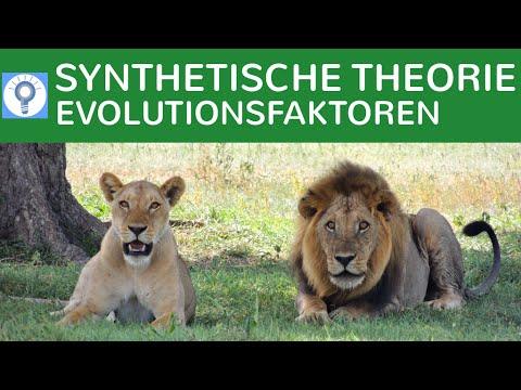 Synthetische Evolutionstheorie - Evolutionsfaktoren | Evolution 9