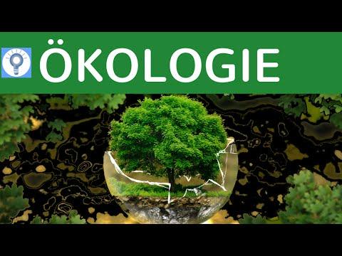 Was ist Ökologie?! & Grundprinzip der Ökologie | Ökologie