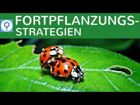 K-Strategen & R-Strategen - Fortpflanzungsstrategien - Strategien der Vermehrung einfach erklärt