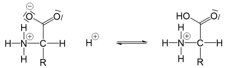 Aminosäuren Ampholyte