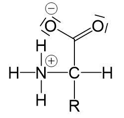 Aminosäuren als Zwitterionen