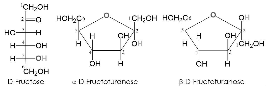 Fructofuranose