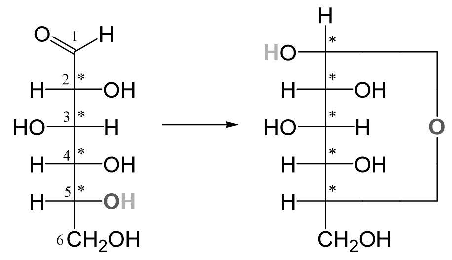 Glucose Ringschluss