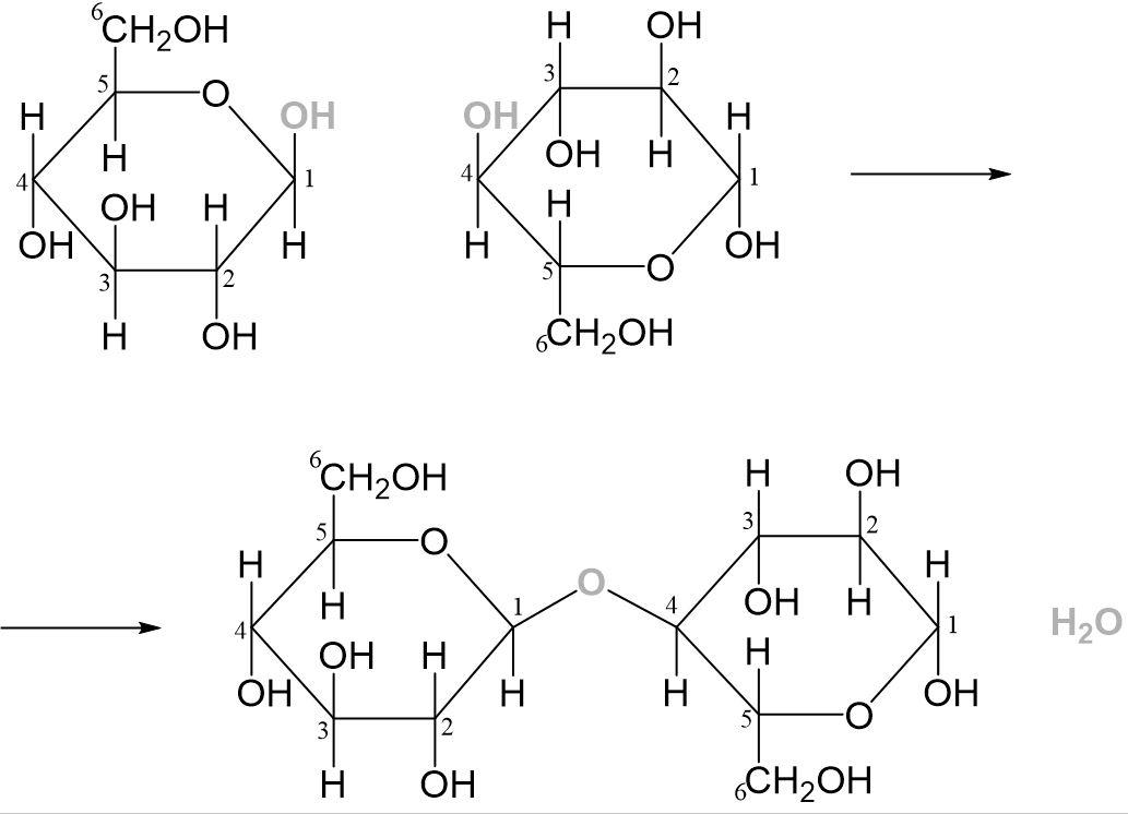 Maltose Reaktion 2