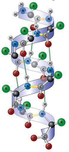 α-Helixstruktur
