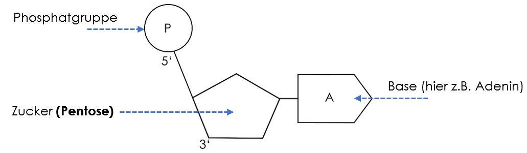 Nukleotid