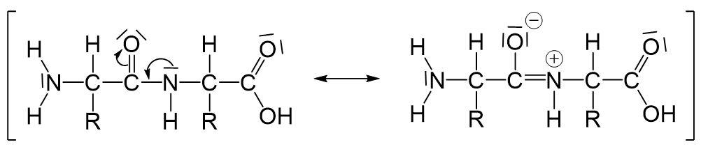 Peptidbindungen