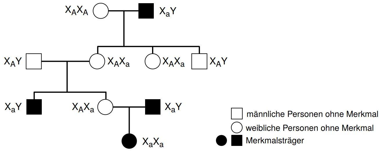 Stammbaumanalyse Theoretisches Material Biologie