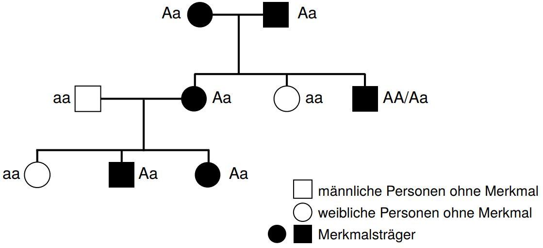 Die Stammbaumanalyse Vollstandig Erklart