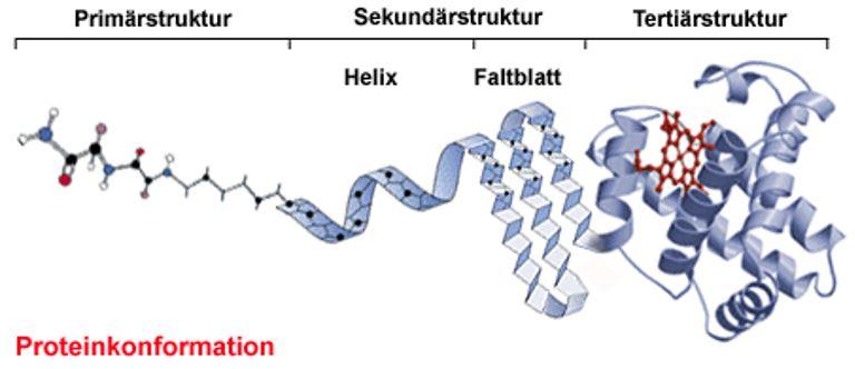 Tertiärstruktur von Proteinen