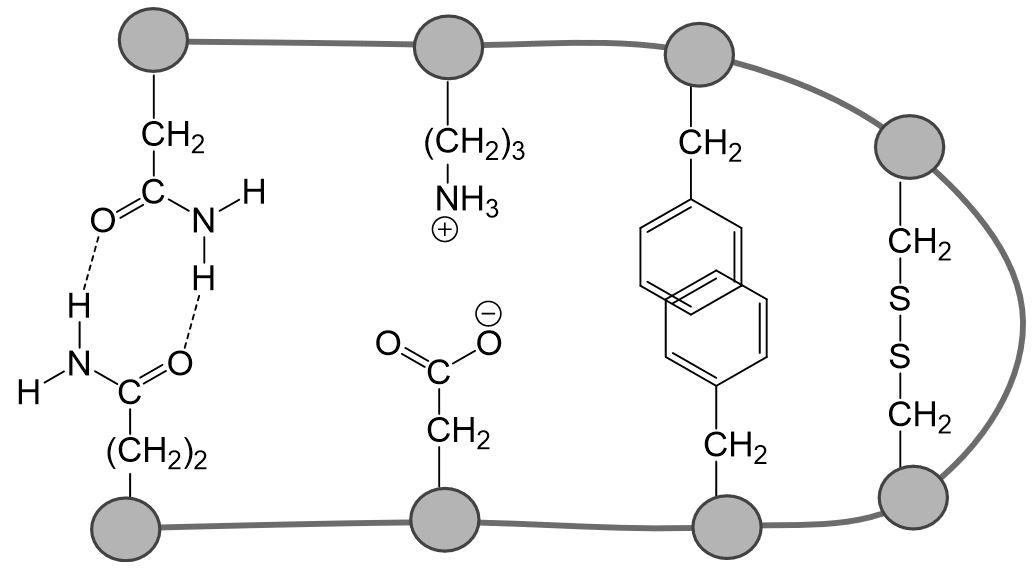 Wechselwirkungen Proteine