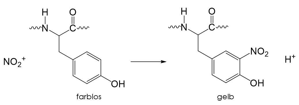 Xanthoprotein-Reaktion Nachweis